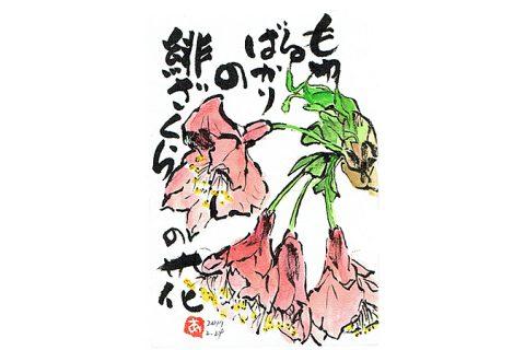 もゆるばかりの緋ざくらの花—アキラさんの絵手紙2017