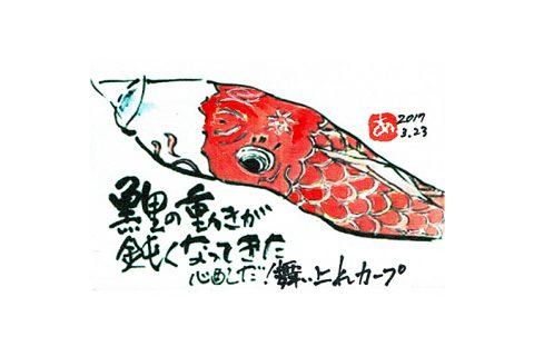 鯉の動きが鈍くなってきた。心配だ!舞い上れカープ–アキラさんの絵手紙2017