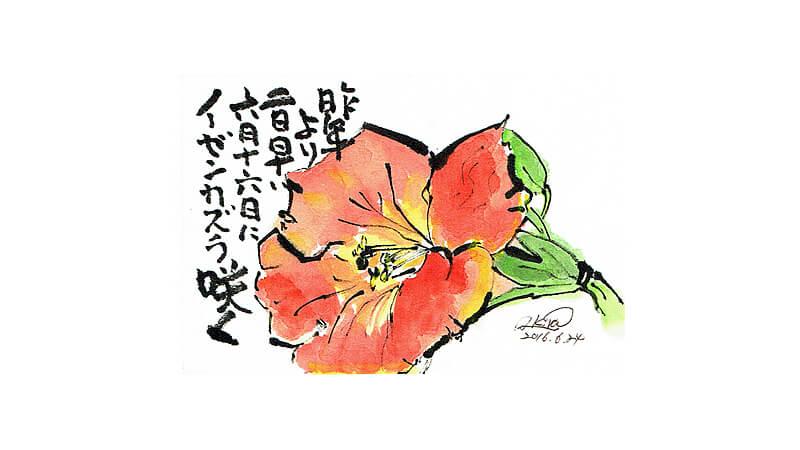 絵手紙--ノーゼンカズラ