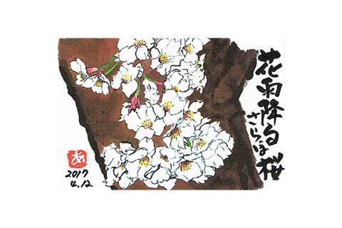 花雨降る 桜さらば—アキラさんの絵手紙2017