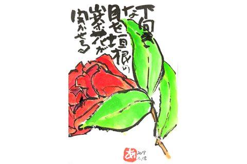 垣根の山茶花が目を開かせる—アキラさんの絵手紙2018