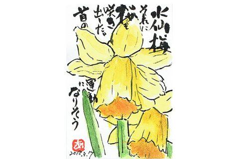 水仙、梅、それに桜も咲きだした。—アキラさんの絵手紙2018